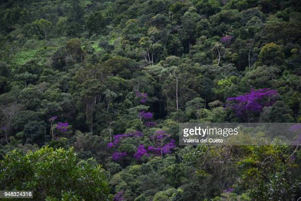 purple trees in the forest - sem fim... valéria del cueto stock pictures, royalty-free photos & images