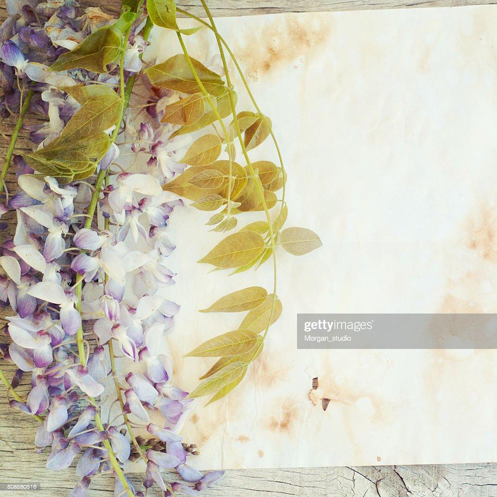 Purple wisteria flowers : Stockfoto
