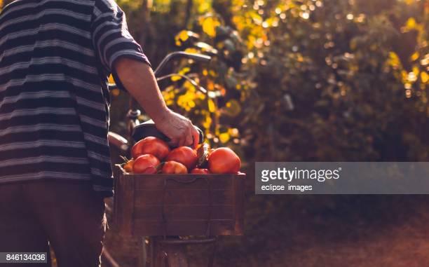 empurre a bicicleta para o mercado... - orange farm - fotografias e filmes do acervo