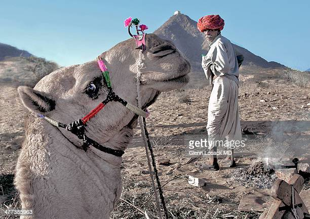 CONTENT] Pushkar Camel fair Rajasthani man Camels head and neck in foreground Thar desert INDIA