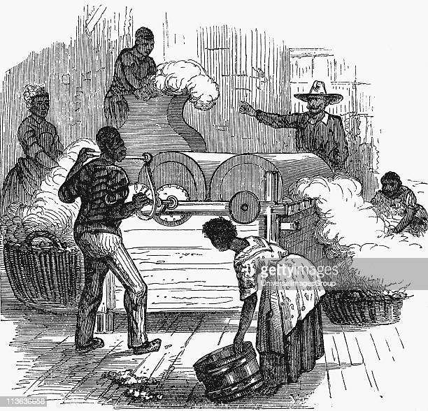 Putting cotton bolls through whipping press before putting it through a saw gin Slave plantation labour in southern states of America Woodcut 1860