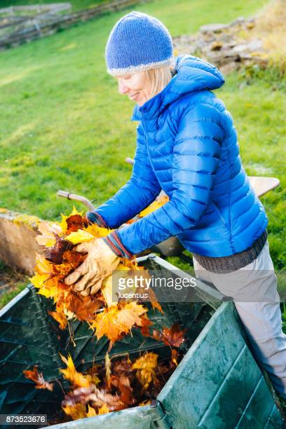 putting fall leaves in compost bin. - chilly bin stock photos and pictures