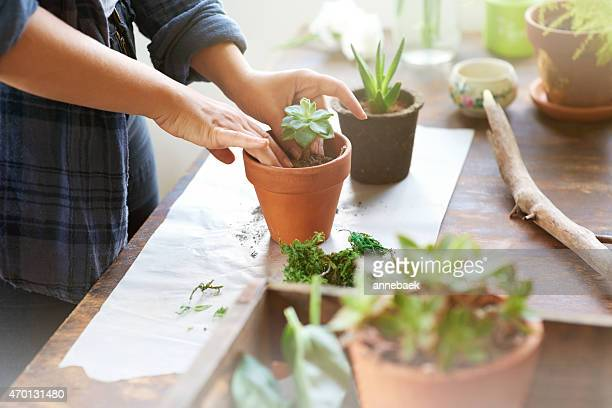 putting her green thumbs to use - bloem plant stockfoto's en -beelden