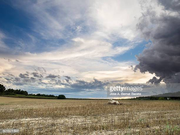 Putting Sun with clouds of storm in a field of harvested wheat