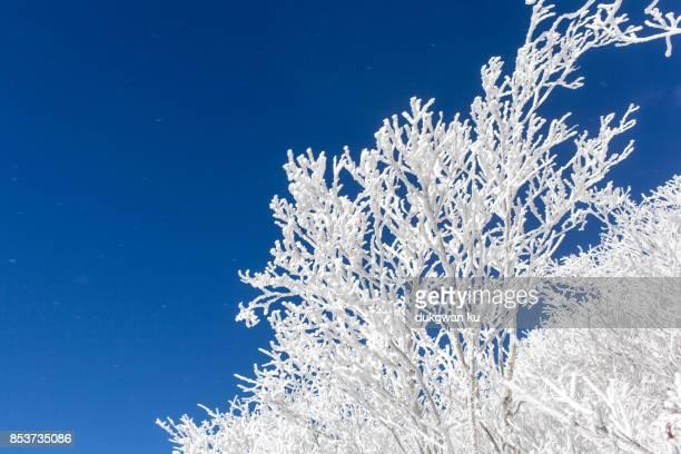 pyeongchang national park winter - événement sportif d'hiver photos et images de collection