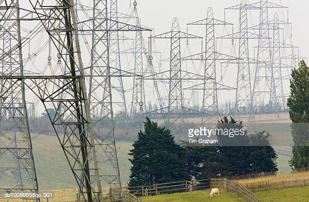 pylons, england, uk - ugly horses stock photos and pictures