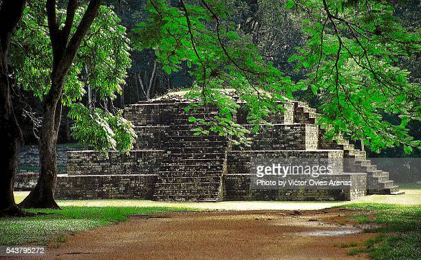 pyramid and tree - honduras stock pictures, royalty-free photos & images