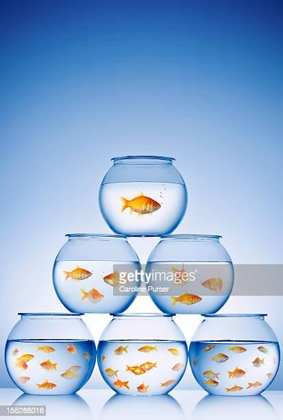 Pyramid of goldfish bowls