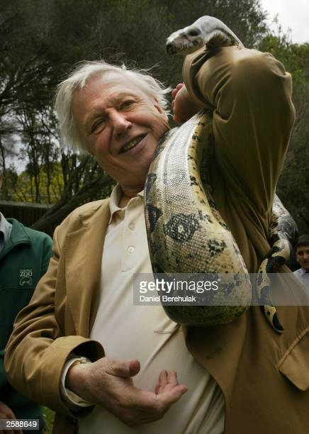 Python greets Sir David Attenborough during a photo opportunity at Taronga Park Zoo October 13, 2003 in Sydney, Australia. Attenborough, a leading...