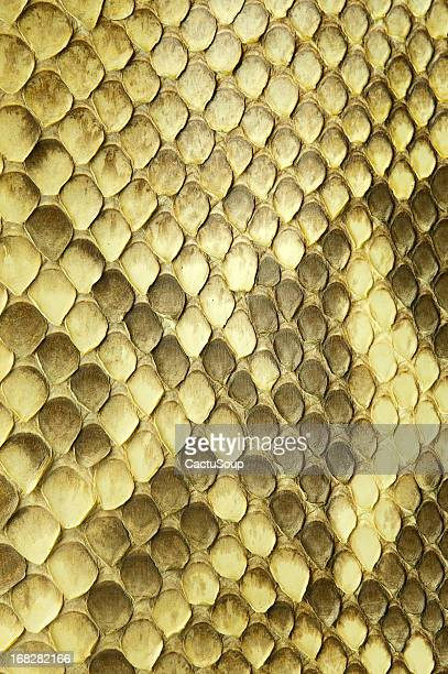 python snake skin - reptile stock pictures, royalty-free photos & images