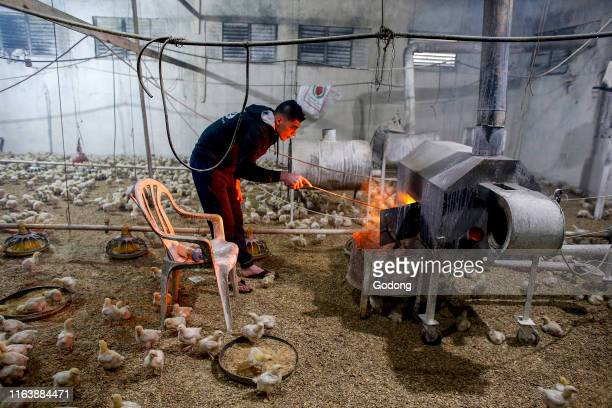 Qais Mahmoud Adel Mahmoud's heated poultry farm in Beit Imrine West Bank Palestine financed by a loan from ACAD Finance