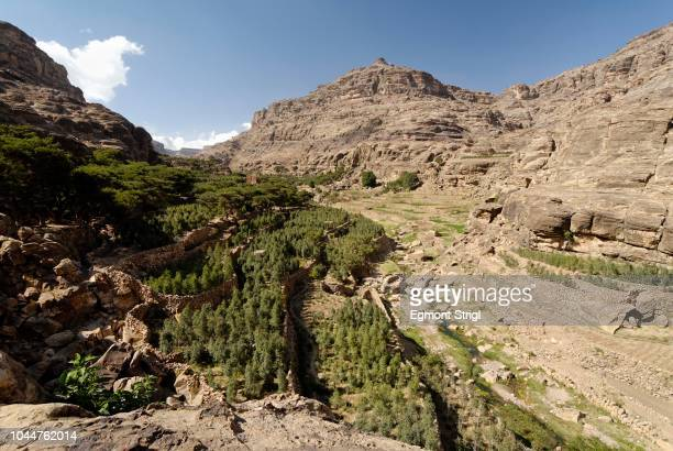 qat plantation in the jemenian mountains, yemen - state stock pictures, royalty-free photos & images