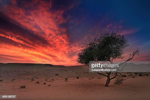 Qatar - Desert