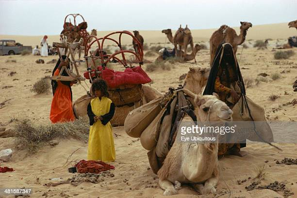 Qatar Transport Bedouin people loading up camels to move camp