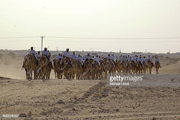 Qatari camel ride / caravan. The ride is a strange experience as the gait of a camel is combination of sway and lurch so that one has the sense that...