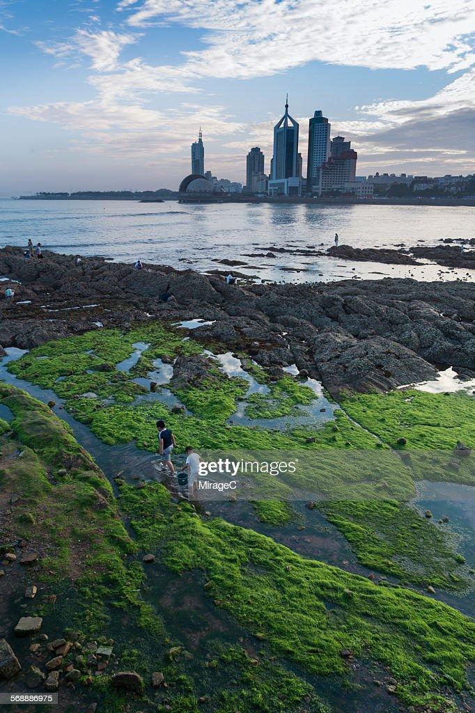 Qingdao beach enteromorpha scene : Stock Photo