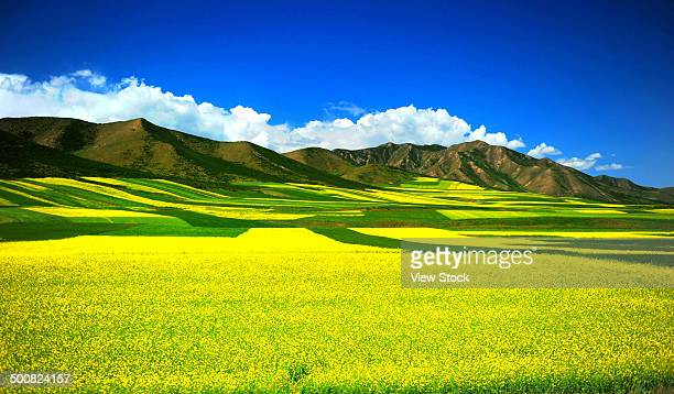 qinghai,china - qinghai province stock photos and pictures