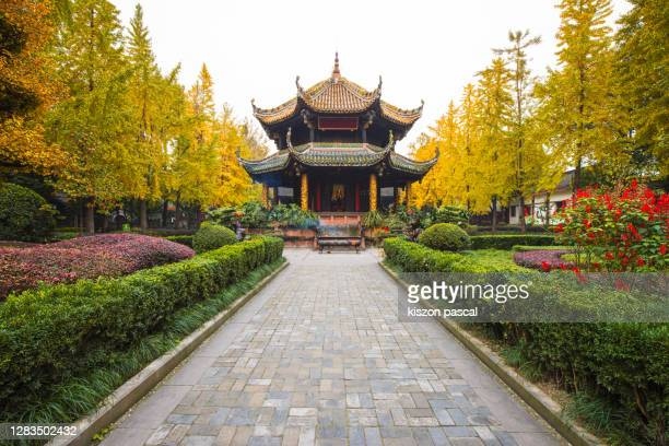 qingyang taoist temple with yellow gingko biloba tree in chengdu . sichuan province in china . - holy city park stock pictures, royalty-free photos & images
