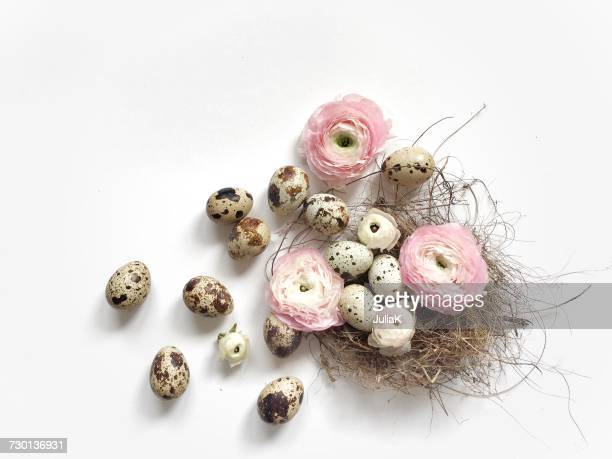 Quail eggs in a birds nest with ranunculi  flowers