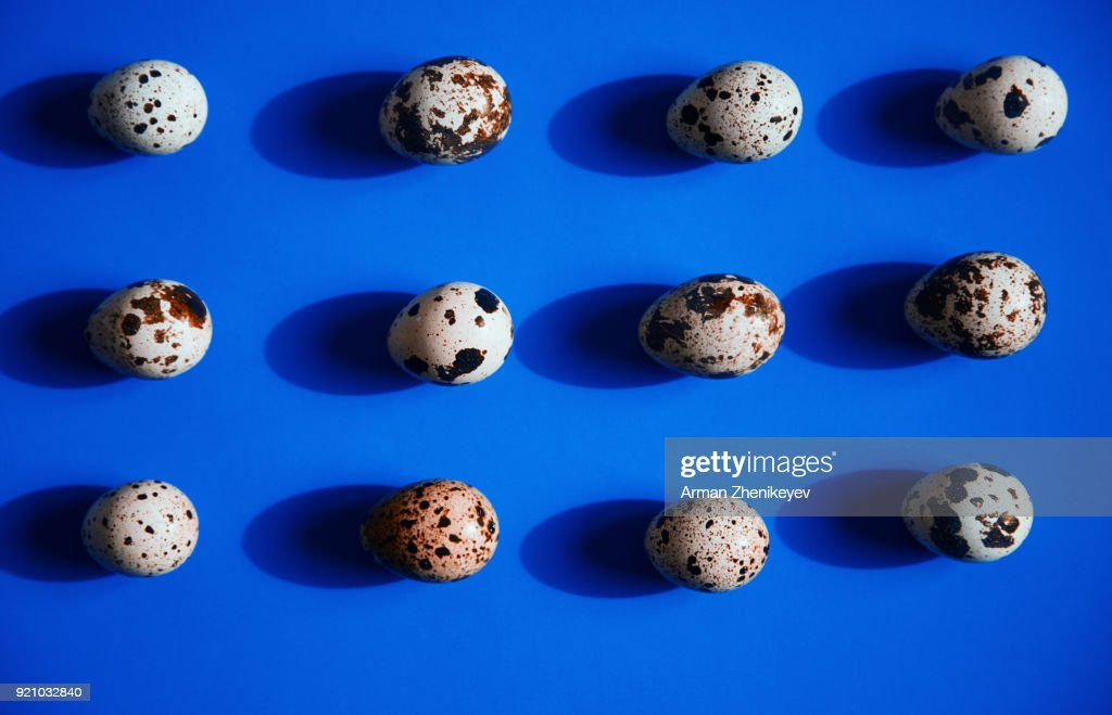 Quail eggs in a row on blue background : Stock Photo