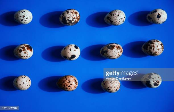 quail eggs in a row on blue background - quail bird stock photos and pictures