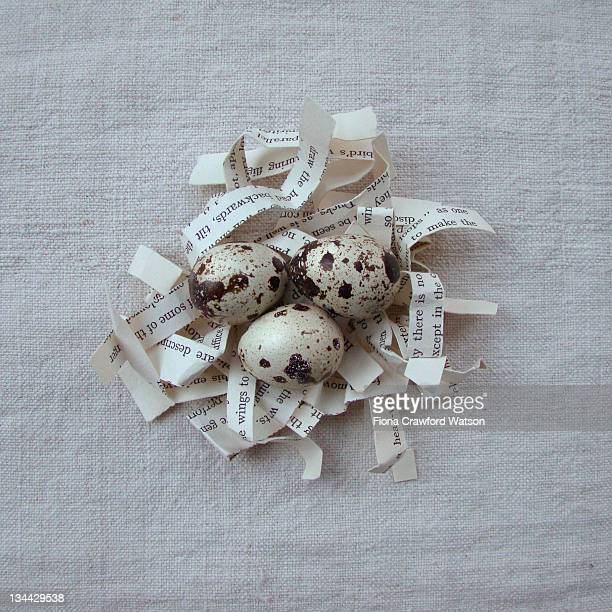 Quail eggs on shredded paper