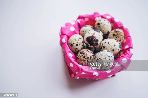 quail eggs - lerexis stock pictures, royalty-free photos & images