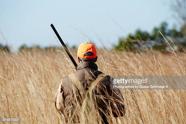 quail hunt - quail bird stock photos and pictures