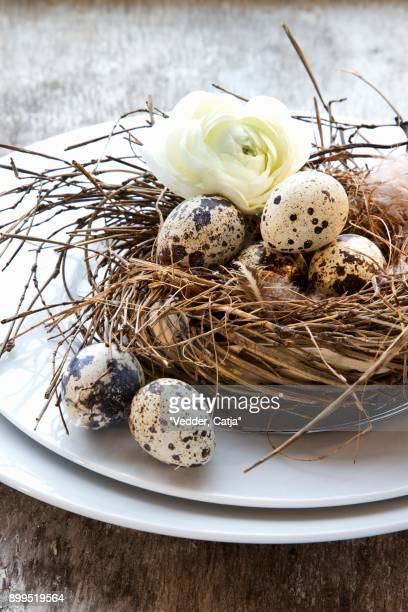 Quails eggs in a nest with a spring flower