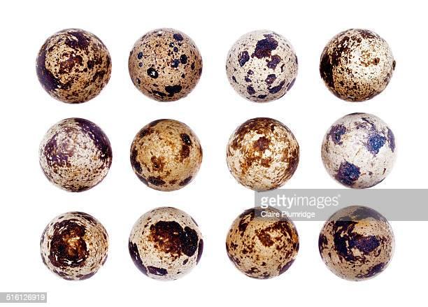 quails eggs - claire plumridge stock pictures, royalty-free photos & images