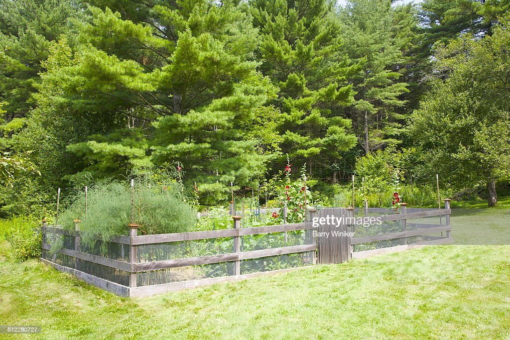 Quaint Garden Fence Around Vegetable Garden : Stock Photo