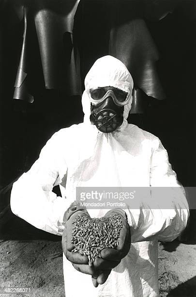 A qualified worker appointed to free from pollution the A area in Seveso wearing white coverall and a gas mask shows to the camera hanfuls of...