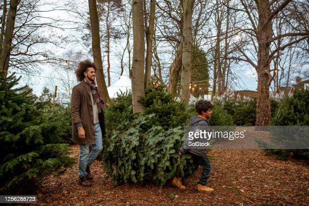 quality time with daddy - christmas tree farm stock pictures, royalty-free photos & images