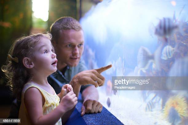 quality time with her father and the fish - fish love stock pictures, royalty-free photos & images