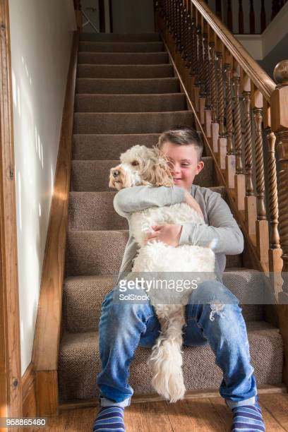 quality time with the dog - cockapoo stock pictures, royalty-free photos & images