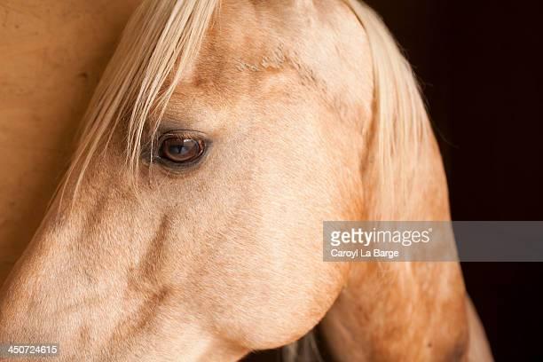 Quarter Horse at Italian Ranch in Tuscany