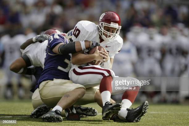 Quarterback Matt LoVecchio of the University of Indiana Hoosiers is sacked by Greg Carothers of the University of Washington Huskies on September 6,...