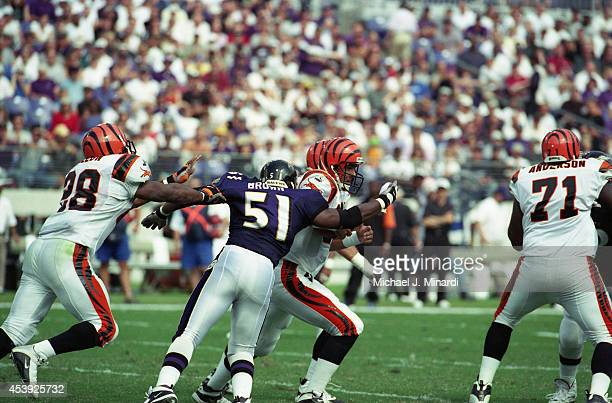 Quarterback Scott Mitchell of the Cincinnati Bengals breaks out of the pocket when rushed by Linebacker Cornell Brown of the Baltimore Ravens during...