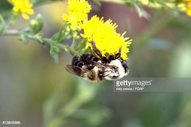 Queen bee on flower