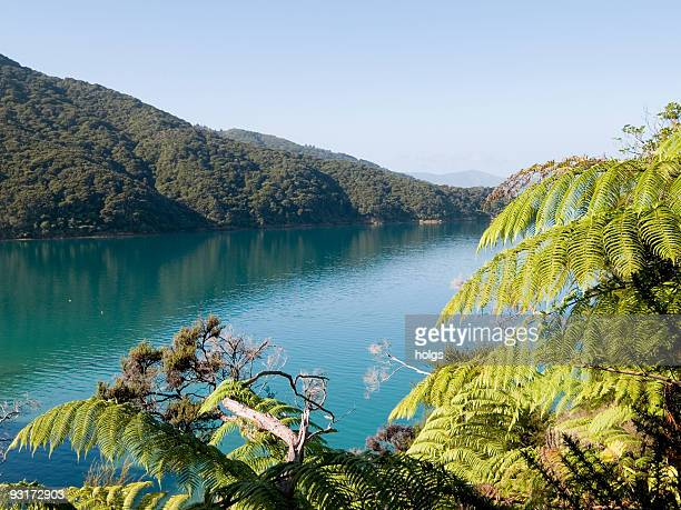Queen Charlotte Sound, NZ