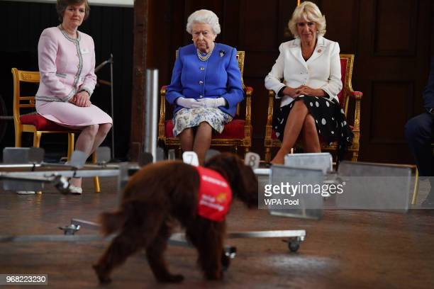 Queen Elizabeth II and Camilla Duchess of Cornwall watch a demonstration of a dog of the charity Medical Detection Dogs sniffing out bladder cancer...