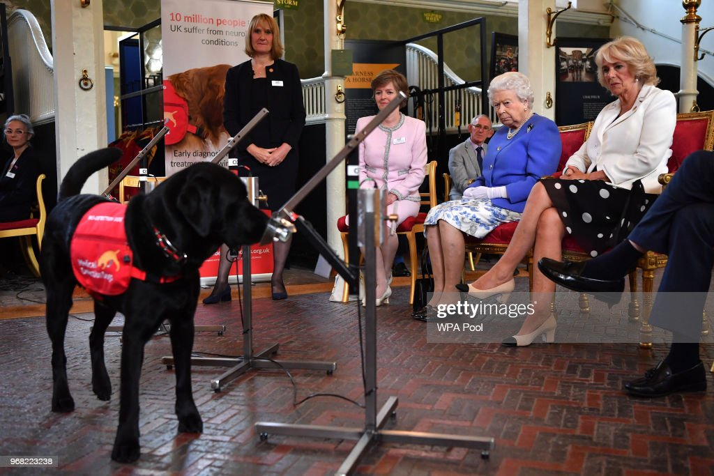 Queen Elizabeth II Attends The 10th Anniversary Celebrations Of The Medical Detection Dogs Charity : News Photo