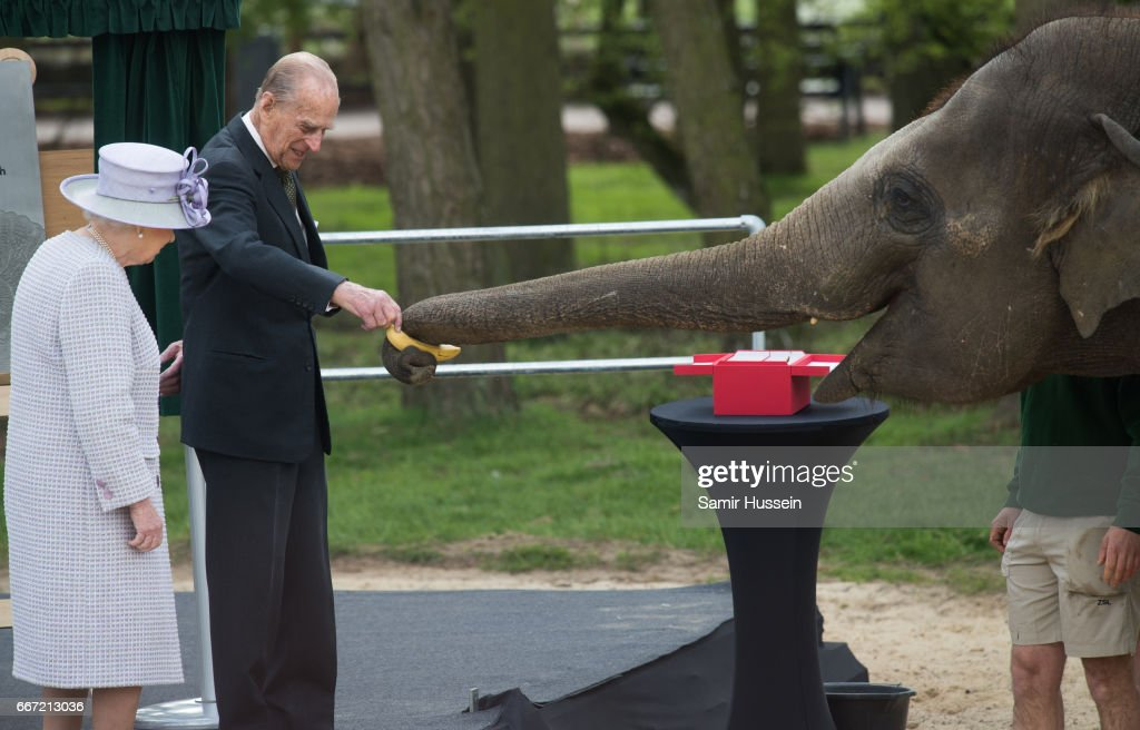Queen Elizabeth II and Prince Philip, Duke of Edinburgh feed Donna the elephant a banana as they visit the ZSL Whipsnade Zoo at the Elephant Centre on April 11, 2017 in Dunstable, United Kingdom.