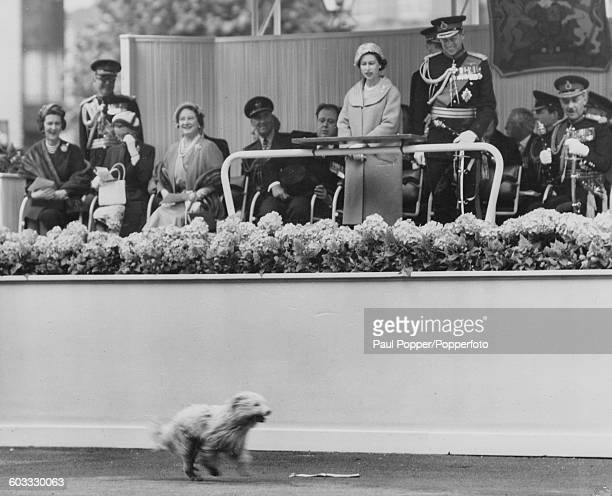 Queen Elizabeth II and Prince Philip Duke of Edinburgh stand and watch an escaped dog run past the Royal podium with Princess Marina Duchess of Kent...