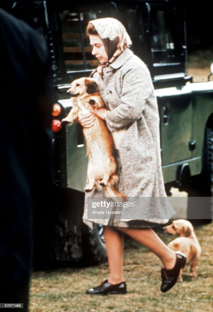 HRH Queen Elizabeth II carries one of her pet dogs at Windsor Great Park,England.