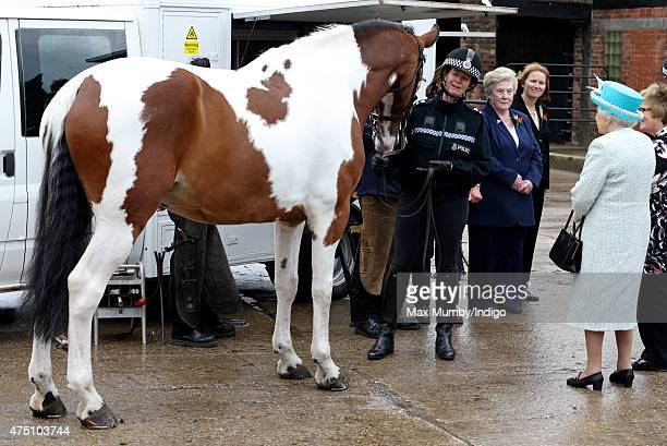 Queen Elizabeth II Duke of Lancaster meets a police horse as she visits lodge livery at Myerscough College on May 29 2015 in Lancaster England