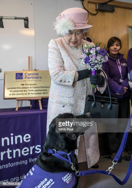 Queen Elizabeth II holds the Posies that 'Yarna' the black Labrador accidentally dropped at her feet following Queen Elizabeth II's visit to the...