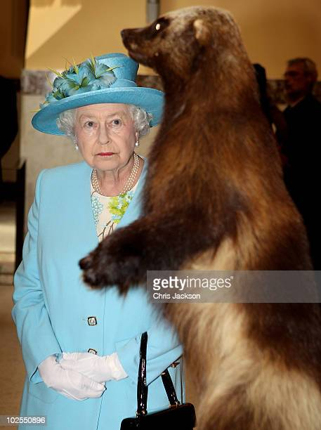 Queen Elizabeth II looks at a wolverine as she visits the Canadian Museum of Nature on June 30 2010 in Ottawa Canada The Queen and Duke of Edinburgh...