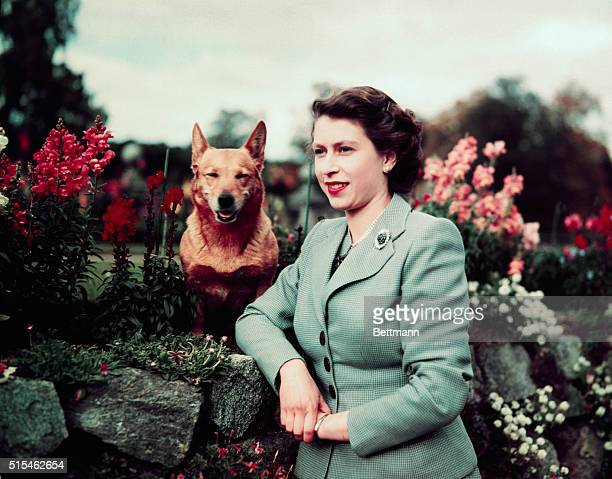 Queen Elizabeth II of England at Balmoral Castle with one of her Corgis 28th September 1952 UPI color slide