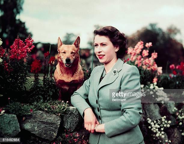 Queen Elizabeth II of England at Balmoral Castle with one of her Corgis 28th September 1952 UPI color slide